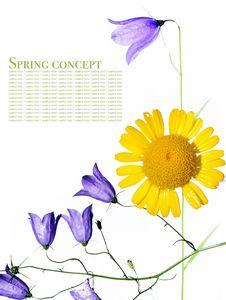 Free Flora Royalty Free Stock Photo - 9250895