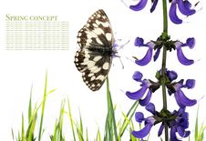 Free Butterfly And Flora Royalty Free Stock Image - 9250926