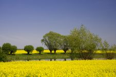 Free Spring Stock Photography - 9251202