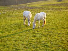 Free Two Horses Stock Photography - 9251542