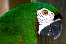 Free Green Parrot Is Watching You Stock Images - 9252774