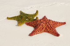 Multicolor Starfishes Stock Images
