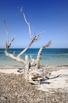 Free Dead Tree By The Ocean Stock Photos - 9252923