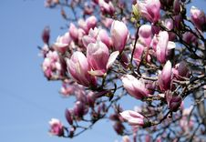 Free Blooming Branch Stock Image - 9253421