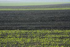 Free Fresh Field Stock Photo - 9254020