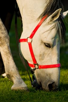 Free Horse Royalty Free Stock Images - 9254439