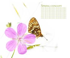 Free Butterfly And Flora Royalty Free Stock Photos - 9254688