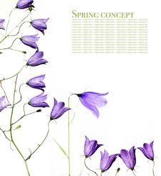 Free Flora Stock Image - 9255141