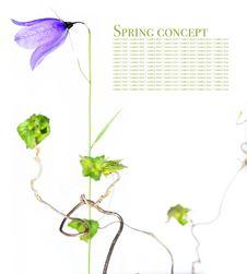 Free Flora Stock Image - 9255181