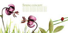 Free Flora And Ladybird Stock Photo - 9255380