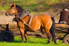 Free Horse Stock Image - 9255941