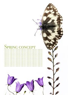 Free Butterfly And Flora Stock Image - 9256011