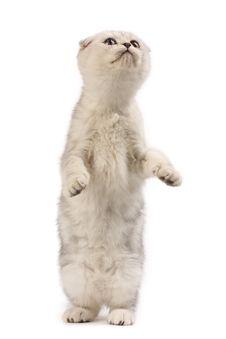 Free Funny Kitten Royalty Free Stock Photography - 9256387