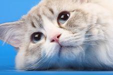 Free Funny Cat Royalty Free Stock Photos - 9256418