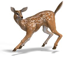 Free Fawn Stock Photos - 9257053