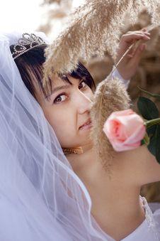 Free Pretty Bride Stock Image - 9258061