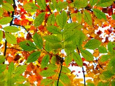 Free Contrasting Leaves On Trees Royalty Free Stock Images - 92524319