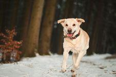 Free Portrait Of Dog Stock Photography - 92524742
