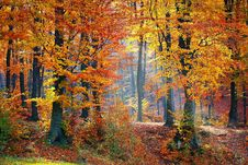 Free Nature, Woodland, Temperate Broadleaf And Mixed Forest, Ecosystem Stock Image - 92525591