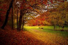 Free Nature, Autumn, Leaf, Woodland Royalty Free Stock Images - 92525669