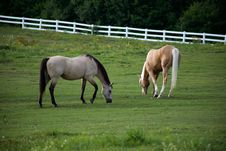 Free Horses In A Pasture  Royalty Free Stock Photo - 92590795