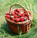 Free Strawberry Stock Images - 9260944