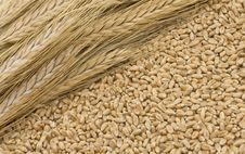 Free Wheat Royalty Free Stock Photo - 9260195
