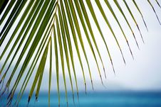 Free Palm Looking Over Sea Stock Photo - 9260740