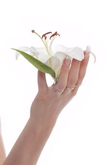 Free Woman S Hand With Flowers Stock Image - 9261381