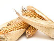 Free Corn Cob Stock Image - 9261401