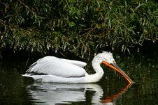 Free Pelican Stock Photography - 9261472