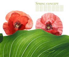 Free Summer Flora Stock Image - 9262151