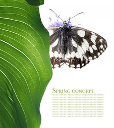 Free Butterfly And Flora Stock Images - 9262204