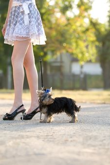 Free Woman With Tiny Terrier Stock Photos - 9262473