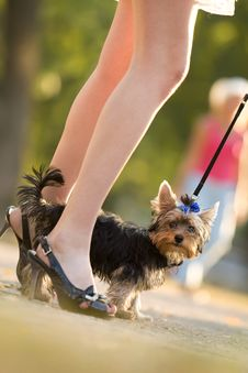 Free Woman With Tiny Terrier Royalty Free Stock Image - 9262486