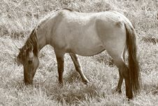 Free Horse Royalty Free Stock Images - 9262729