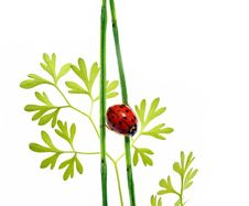 Free Flora And Ladybird Stock Images - 9263684