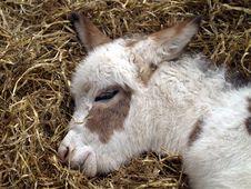 Free Donkey Royalty Free Stock Image - 9264016