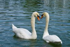 Free Two Swans In Love Stock Photography - 9264622