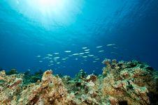 Free Ocean, Fish And Sun Royalty Free Stock Image - 9266286