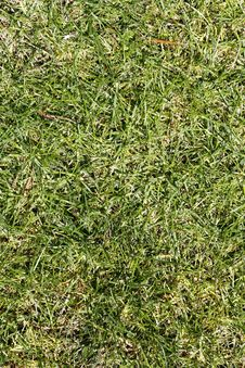 Free Green Grass Texture On A Golf Course Royalty Free Stock Image - 9266546