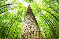 Free Green Forest Royalty Free Stock Image - 9267116