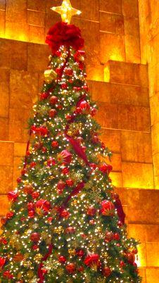 Free Christmas Tree, Plant, Christmas Ornament, Branch Royalty Free Stock Image - 92651946