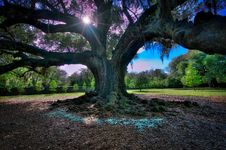Free Audubon Park Oak Tree, NOLA Stock Photo - 92652840