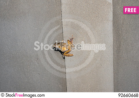 Free Frog On The Wall Royalty Free Stock Photos - 92660668