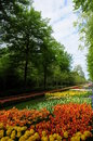 Free Dreaming Flower Road Stock Image - 9270831
