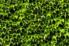 Free Background Pattern Of Leaves Royalty Free Stock Photography - 9270277