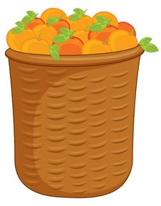 Free Oranges Stock Photos - 9270323