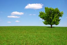 Free Lonely  Tree On Green A Meadow Stock Images - 9270854
