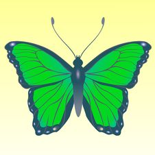 Free Butterfly Stock Image - 9271691